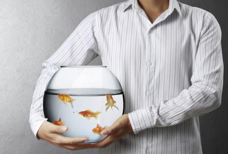 man holding goldfish